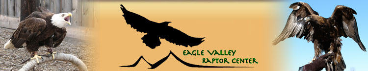 Eagle Valley Raptor Center - wildlife rehabilitation